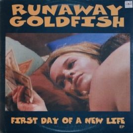 Runaway Goldfish – First day of a new life